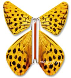 Faire part Magic Flyer / Papillon la Panthère (Pseudopanthera macularia) / The Speckled Yellow Buttefly / #papillon #butterfly #panthère #speckeled #jaune #yellow #ennominae #pseudopanthera #carte #card #invitation #announcement #magicflyer Mark Making, Papillon Butterfly, Insects, Card Invitation, Butterflies, Magic, Save The Date Cards, Papillons, Yellow
