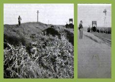 Lado izq.: Aspecto de un médano de unos 4 m. de altura, ubicado en el Km 537 del F.C.N.D.F. Sarmiento entre las estaciones Peña y Agustoni. Lado der.: El mismo médano con la vegetación lograda luego de transcurrido 1 año de la aplicación de las técnicas descriptas en el presente trabajo. Fuente: Prego, A. Fijación de médanos. En: Almanaque del Ministerio de Agricultura para el año 1953/1954.