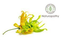 【精油:イランイラン】~弱った心に優しく働きかける「花の中の花」~#エッセンシャルオイル#アロマレシピ#アロマテラピー#ハーブ#ガーデニング
