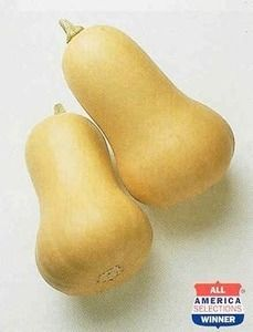 Pase Seeds - Squash Winter Early Butternut Hybrid Vegetable Seeds, $3.99 (http://www.paseseeds.com/squash-winter-early-butternut-hybrid-vegetable-seeds/)