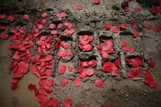 Poppies in Tank tracks