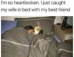 damn, worst case ever | TrendUso #betrayal #dog #dogs #wife #sleep #sleeping #sleepingtogether #cheat #cheating #joke #cheater #jokes #funny #hilarious #humor #humorous #humour #meme #memes #memesdaily #lol #wtf #omg #rofl #pet #pets #cute #adorable #dogsfunnyjokes