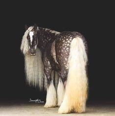 Красивые Лошади, Смешные Лошади, Сельскохозяйственные Животные, Милые Животные, Лошади, Татуировки C Лошадями, Самые Милые Животные