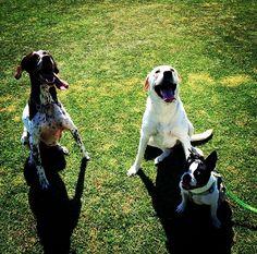 """You bark, I bark, we all bark for the dog park! - Degarmo Dog Park - Chico, CA -"""