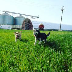 #dogs #halesemirotunde