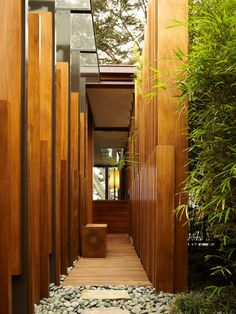 planter des bambous, bambous plantés autour d'une maison moderne