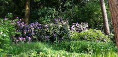 Bostuin Ermelo - Denkers in TuinenDenkers in Tuinen   Ontwerpers van stijlvolle en tijdloze tuinen