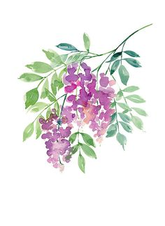 Wisteria in Bloom - Watercolor Art Print -Home decor