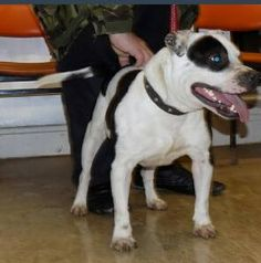 This dog was found on the 21st February in the hartlepool area, please help in reuniting him with his owner