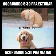 Collection of 30 Funny Brazilian Memes - Memes BRasileiros Funny Disney Memes, Funny Jokes To Tell, Funny Puns, Hilarious, Memes Status, Dankest Memes, Sleepover Pranks, Memes Do Facebook, Cheer Funny