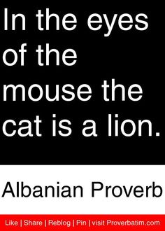 In the eyes of the mouse the cat is a lion. - Albanian Proverb #proverbs #quotes