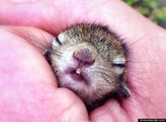A film maker saved a squirrel