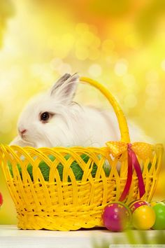 happy_easter_bunny-wallpaper-640x960