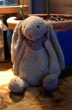 FOUND on WIMBLEDON COMMON, LONDON  this Jellycat bunny was found, cold and wet, this morning on Wimbledon Common. Needs help to find owner. found by @SusannahCannell on twitter https://twitter.com/SusannahCannell