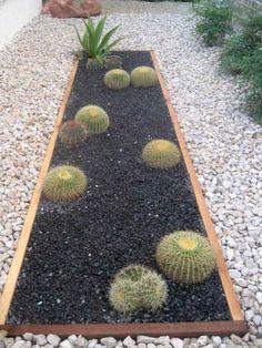 bac délimité avec cactus