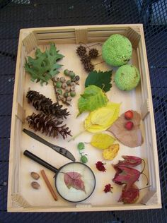 Create a Fall Nature Tray -- a simple invitation to explore that encourages kids to look at the science & natural changes of the season!