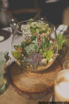 Ideas For Succulent Wedding Centrepiece Terrarium Centerpiece