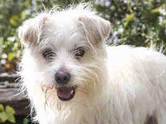 SL since 2/4/15. M/Neut. Come visit me at Agoura Animal Care Center (CA)