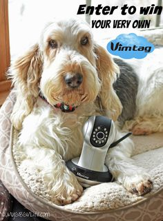 My GBGV Life enter to win your very own #Vimtag video surveillance camera! Catch your pets in action when you are not home from your smartphone, tablet, or computer! $100 value! #sponsored