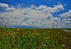 Lantana in Florida Sea of Grass