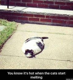 nice Funny Animal Pictures Of The Day - 24 Pics