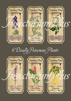 6 Vintage Poisonous Plants Labels 6 of the most poisonous and deadliest plants & flowers  - deadly nightshade - wolfsbane - dolls eyes - angless