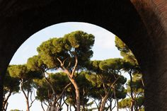 Villa Borgese Gardens -- pine trees as seen through an arch.