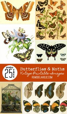 25+ Free Butterflies and Moths Vintage Printable Images | Remodelaholic.com