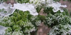 Over boerenkool, etiketten en frisse lucht - Tuin - Naober Magazine