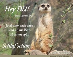 Eine von 61029 Dateien in der K. Cute Funny Animals, Cute Baby Animals, Snoopy Friday, Good Night, Good Morning, German Quotes, Free To Use Images, Nighty Night, Dance Quotes