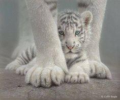 Tiger cub - www.abil