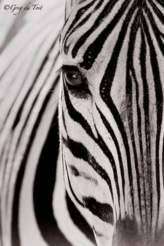 zebra national geographic..for Maura her favorite animal in the zoo