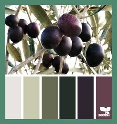 Design Seeds, for all who love color. Apple Yarns uses Design Seeds for color inspiration for knitting and crochet projects. Exterior Paint Colors, Paint Colors For Home, House Colors, Exterior Design, Wall Exterior, Paint Colours, Gray Exterior, Stone Exterior, Wall Colours