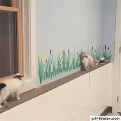 Cute Overload: Internet`s best cute dogs and cute cats are here. Aww pics and adorable animals. Cute Funny Animals, Funny Animal Pictures, Cute Baby Animals, Funny Cats, Fluffy Animals, Animal Pics, Cute Kittens, Cats And Kittens, Kittens Playing