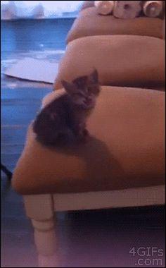 Jumping kitten...