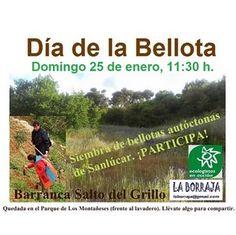 #Cadiz SIEMBRA DE BELLOTAS AUTÓCTONAS ecoagricultor.com