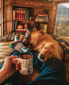a golden retriever. Cute Puppies, Cute Dogs, Dogs And Puppies, Doggies, Animals And Pets, Cute Animals, Autumn Cozy, Cosy Winter, Winter Love