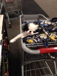 Shopping with Turner...Baby Chin