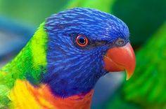 A POP OF COLOR! ▶ Parrot