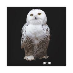 Million Owl Love by Kat Worth Canvas Print