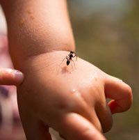 Fingerspiel: Ameisen laufen - Kleinstkinder
