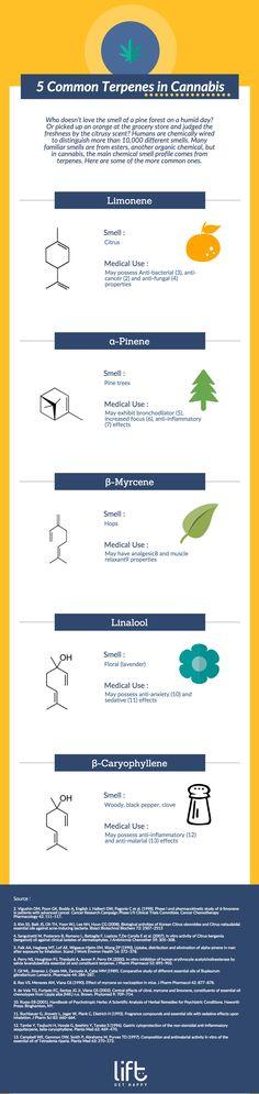 Terpenes #EndoCannabinoidSystem | Google #1Cure4Cancer