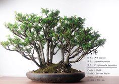 Bonsai Art, Japanese, Plants, Style, Swag, Japanese Language, Plant, Outfits, Planets