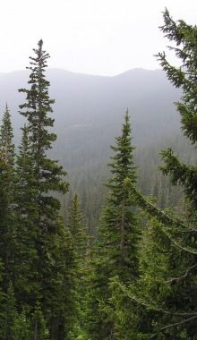 Trees are important, valuable and necessary to our very existence. Without trees, we humans would not exist on this beautiful planet. Foggy Mountains, Conifer Trees, Misty Forest, Tree Seeds, Forest House, Amazing Nature, Vacation Spots, Pretty Pictures, Science Nature