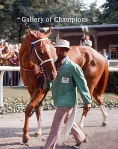 Secretariat 1973 Belmont Stakes