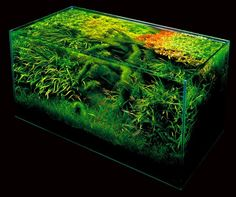 ADA Nature Aquarium Aquascape