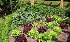 Anbauplanung im Gemüsegarten - Eine gute Anbauplanung ist die halbe Miete für den Ernte-Erfolg im Gemüsegarten. Nutzen Sie den arbeitsarmen Winter, um die Gemüsebeete für die neue Saison zu planen und das nötige Saatgut zu kaufen.