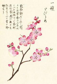 "heaveninawildflower: "" Cherry Blossom (1828) by Kan'en Iwasaki. The Royal Botanical Gardens, Kew. Artfinder.com """