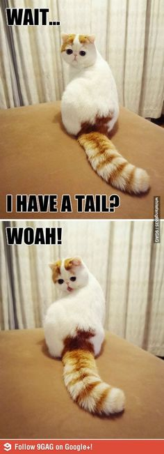 Fun Claw - Funny Cats, Funny Dogs, Funny Animals: Funny Animal Pictures With Captions - 37 Pics and like OMG! get some yourself some pawtastic adorable cat apparel! Animal Captions, Animal Jokes, Funny Animal Memes, Cute Funny Animals, Funny Animal Pictures, Cute Baby Animals, Cat Memes, Funny Cute, Funny Dogs