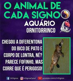 Read Animal De Cada Signo from the story Signos by Sexytaekookv (𝙶𝙰𝚃𝙸𝙽𝙷𝙰) with reads. Aquarius, Mbti, Memes, Zodiac Signs, Astrology, Cancer, Humor, Wattpad, Animals